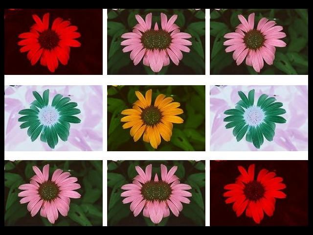 Uploaded Image: daisycollageborder.jpg
