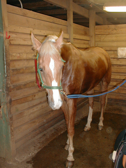 Uploaded Image: horse.jpg