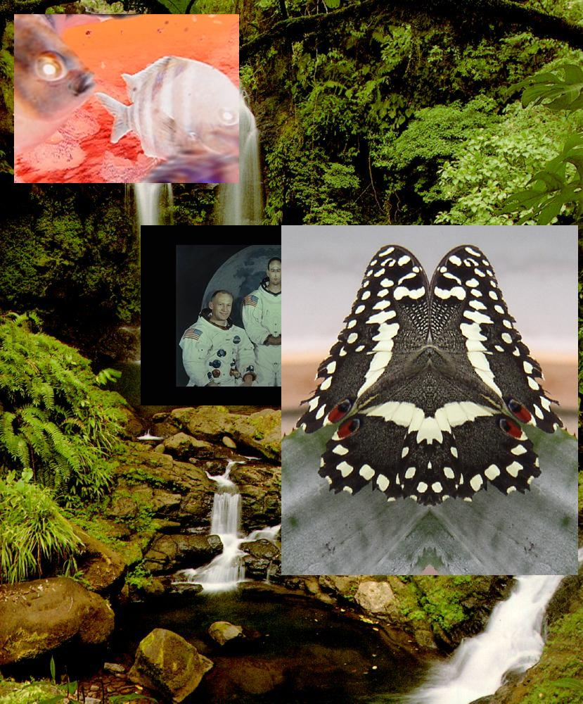 Uploaded Image: waterfallcollage.jpg