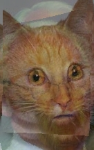Uploaded Image: manCat4.jpg