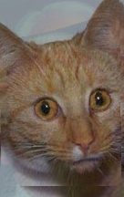 Uploaded Image: manCat5.jpg
